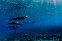 Underwater World By Sara Lee (25)