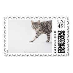=>>Cheap          Cat walking stamps           Cat walking stamps online after you search a lot for where to buyDeals          Cat walking stamps Review from Associated Store with this Deal...Cleck Hot Deals >>> http://www.zazzle.com/cat_walking_stamps-172044839283763486?rf=238627982471231924&zbar=1&tc=terrest