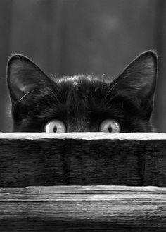 Black Cat peering