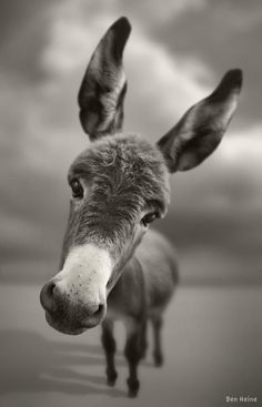 Funny Donkey! Cute Donkey! - https://www.soumo.eu/funny-donkey-cute-donkey-2/