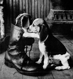 Polaroid dog boot 1962 by Captain Geoffrey Spaulding.