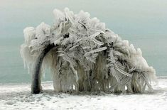 Tree after Winter Ice Storm.Bowing before Mother Nature! Ice Art, Wild Weather, Weather Unit, Ice Storm, Snow And Ice, Winter Beauty, Winter Scenes, Belle Photo, Amazing Nature