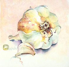 still life garlic 1 watercolour web Essential Garlic Lucinda Hayes