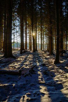 Sun through a dark winter forest by Fredde Nilsson, via Flickr