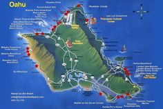 turtle beach ohau | My Brain is On A Hawaiian Honeymoon (Volume 1: Oahu)