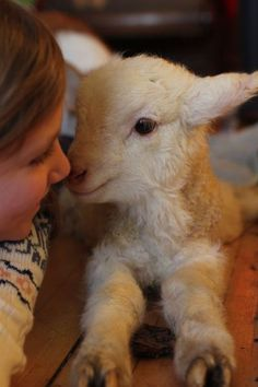 five green acres ~ sweet little lamb ~(I love lambs...They are just precious...like Deer ♥)
