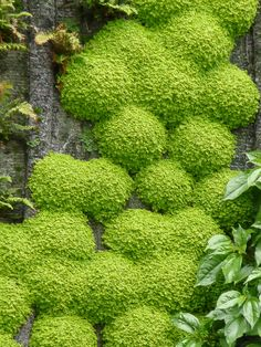 The oasis of Aboukir, green wall created by Patrick Blanc, rue d'Aboukir, Paris 2nd (75)