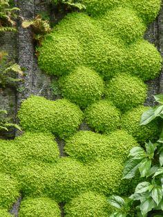 HELXINE / L'oasis d'Aboukir, mur végétal créé par Patrick Blanc, rue d'Aboukir, Paris 2e (75), 24 juin 2013, photo Alain Delavie