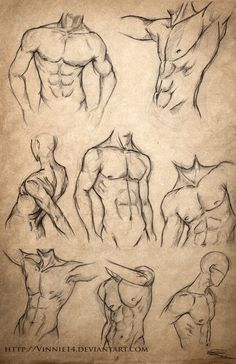 Male Body Sketches by Vinnie14 Más