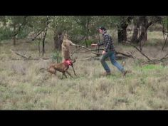 Guy Punches Large Kangaroo In The Face To Save His Dog