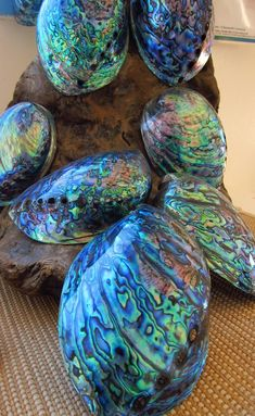 Paua shells - Aotearoa - more commonly known as New Zealand.
