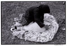 "Shearing a sheep. ""A Greek Portfolio"" © Costa Manos/Magnum Photos Magnum Photos, Old Photos, Vintage Photos, Greece Pictures, Crete Island, Sheep Farm, Photographer Portfolio, Crete Greece, Light Year"