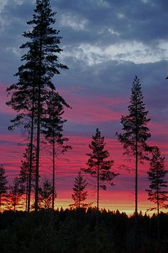 sunset in the woods.