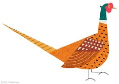 "Illustration for a feature on ""wild bird"" in Martha Stewart Living magazine, September 2013 issue."