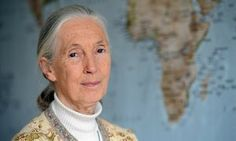 Jane Goodall calls Trump's climate change agenda 'immensely depressing' | Environment | The Guardian