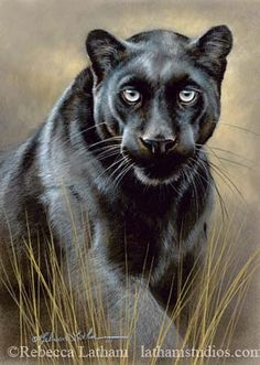 Paintings by international wildlife artist Rebecca Latham. Featuring North American animals, birds, & nature in watercolor painted in miniature. Small Paintings, Animal Paintings, Animal Drawings, Beautiful Cats, Animals Beautiful, North American Animals, Africa Art, Wildlife Nature, Whimsical Art