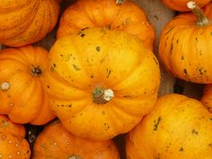 ChildFund International is dedicated to helping children in need. No Bake Pumpkin Pie, A Pumpkin, Halloween Candy Sale, No Bake Pies, Food And Drink, Baking, Vegetables, Recipes, Fundraising Ideas