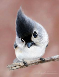 Pointy head...some interesting photo manipulation.  Tufted Titmouse maybe?