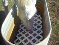 Image result for best slow feeders for horses