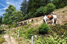 Menzenschwand, Hochschwarzwald Wandern