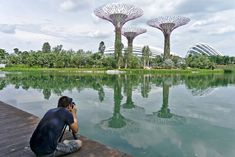ces drôles d'arbres super connus Singapore, Asia