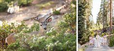 deer sequoia national park wedding
