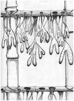dessin réalisé lors de l'écriture d'un texte sur la culture artificielle de plantes marines à Tahala, la cité des aigles.
