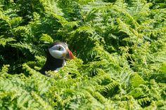 Peek a boo Peek A Boos, Bird, Photography, Animals, Photograph, Animales, Animaux, Birds, Fotografie