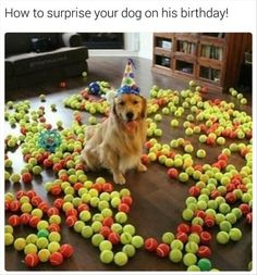 funny-animals-68 funny animal pictures pictures funny Animals