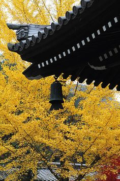 Nanzenji temple #kyoto #japan #autumn