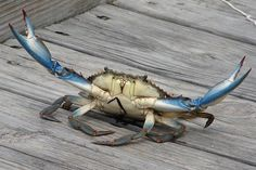 Love Blue Crab!