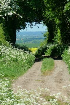 Old dirt road through the countryside in June, Hertfordshire, England