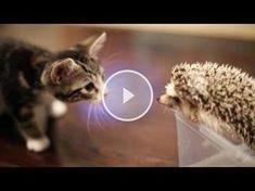 Katze trifft Igel :-)