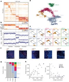 Single-cell mapping