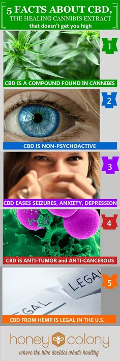 Everyone knows about medical marijuana, and most people have heard of THC. CBD, another highly therapeutic compound in cannabis, is now gaining interest because it doesn't produce a psychoactive high.
