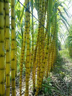 mixuri bamboo