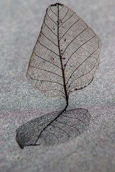 Leaf - Exploración de las pequeñas cosas.