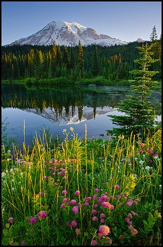sunrise, Mount Rainier National Park, Washington