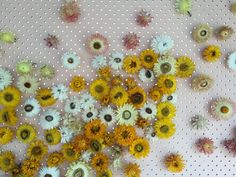 paper daisy wall by the sisters www.thesisters.net.au