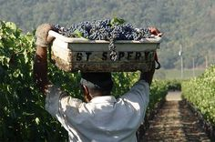 Fashion house Chanel has made its first wine acquisition outside France, buying Napa Valley's St Supéry from the Skalli family for an undisclosed sum.