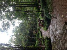 Selva Negra Nicaragua!