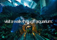 Bucket List for Girls: Visit A Walk-Through Aquarium [ ]