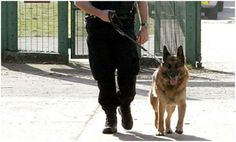Request To Search With Police Dogs Are Legal Under Fourth Amendment
