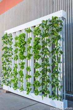 14 besten hydroponics bilder auf pinterest hochbeet hydrokultur garten und kr utergarten. Black Bedroom Furniture Sets. Home Design Ideas