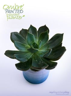 Ombre Painted Succulent Planter! - Anything & Everything