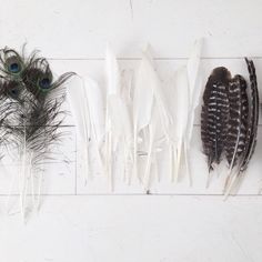 what to do with those... #feathers Web Instagram User » Followgram