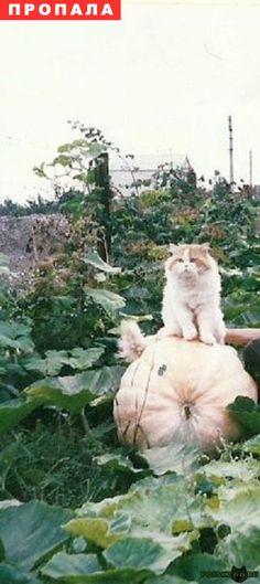 Пропал кот г.Энгельс http://poiskzoo.ru/board/read32262.html  POISKZOO.RU/32262 Помогите найти кота! Бело-рыжий перс, возраст .. лет. Пропал на дачах завода Урицкого. Было сообщение, что видели такого кота в пос. Кирпичного завода г. Энгельса. Очень прошу кто видел или знает о судббе кота позвонить тел. ...   РЕПОСТ! @POISKZOO2 #POISKZOO.RU #Пропала #кошка #Пропала_кошка #ПропалаКошка #Энгельс