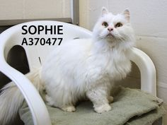 Adopted! Sophie has found her forever home. 4/27/15.