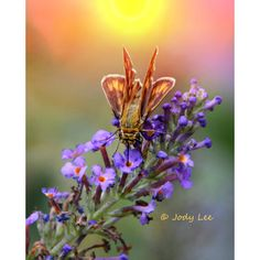 Moth, Nature Photography, Butterfly, Flower, Wall Art, Morning sun,... ($17) ❤ liked on Polyvore featuring home, home decor, wall art, butterfly home decor, photographic wall art, flower wall art, photography wall art and sun wall art