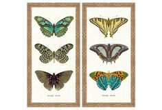 Butterfly Panel Diptych